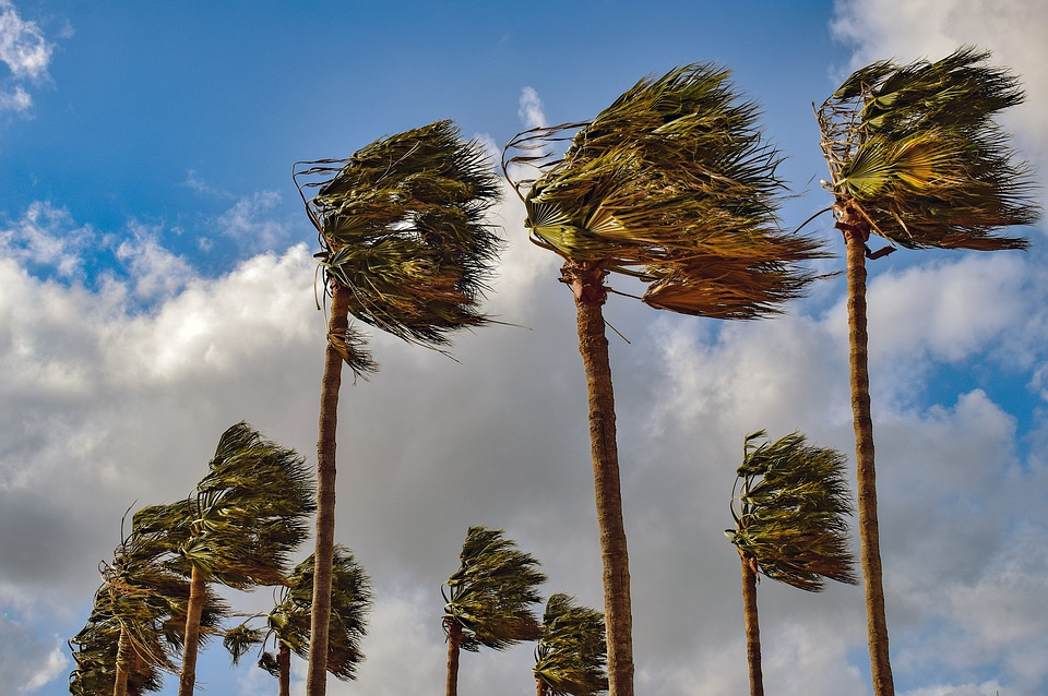 Club Championship 5k - The Muddy Welly 5km (Sun 15th Dec 2019)